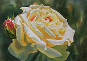 Bud Painting Framed Prints - Yellow Rose with Bud Framed Print by Sharon Freeman