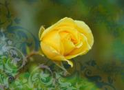 Roses Framed Prints - Yellow Rose with pattern Framed Print by Cathie Tyler
