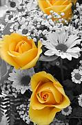 Floral Digital Art - Yellow Roses by Amy Fose