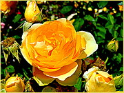 Gardening Photography Digital Art Posters - Yellow Roses Poster by Mindy Newman