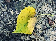 Susan Olga Linville - Yellow Spotted Leaf