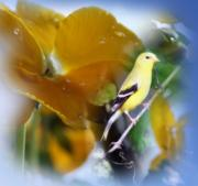 Cathy Beharriell Digital Art - Yellow Spring by Cathy  Beharriell