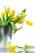 March Prints - Yellow spring tulips Print by Sandra Cunningham