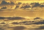 Yellow Sunset Print by Carl Shaneff - Printscapes