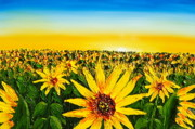James Dunbar - Yellow Sunset Sunflowers