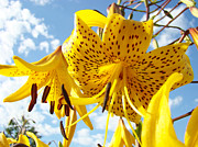 Flora Framed Prints Photos - Yellow Tiger Lily Flowers art prints Lilies by Baslee Troutman Art Prints Photography