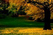 Yellow Tree Print by Ariane Moshayedi