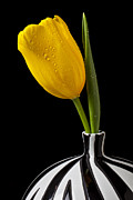 Floral Metal Prints - Yellow tulip in striped vase Metal Print by Garry Gay