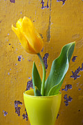Dew Prints - Yellow tulip in yellow vase Print by Garry Gay
