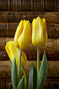 Dew Prints - Yellow tulips and old books Print by Garry Gay