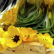 Nice Prints - Yellow tulips Print by Bernard Jaubert