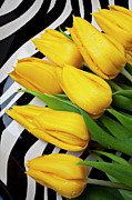 Yellow Flowers Posters - Yellow tulips on striped plate Poster by Garry Gay