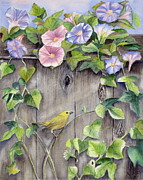 Wooden Fence Posters - Yellow warbler and morning glory Poster by Patricia Pushaw