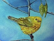 Bird Pastels - Yellow Warbler Close-up by Teresa Vecere