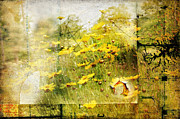Wildflowers Mixed Media Posters - Yellow Wildflower Field Abstract Poster by Elaine Manley