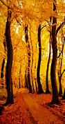Yellow Wood Print by Stefan Kuhn