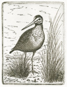 Shoreline Mixed Media Prints - Yellowlegs Shorebird Print by Charles Harden