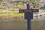 Steve Ohlsen Metal Prints - Yellowstone - Fly Fishing Only Sign 2 Metal Print by Steve Ohlsen