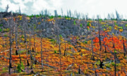 Decaying Digital Art Prints - Yellowstone - Forest Burn 2 Print by Steve Ohlsen