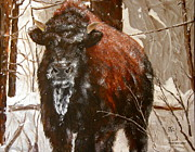 Sharon Tabor - Yellowstone Calf