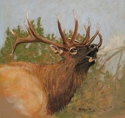 Turea Grice - Yellowstone Elk