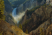 Yellowstone Lower Falls Print by Johan Elzenga