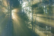 Crepuscular Rays Photos - Yellowstone Morning by Sandra Bronstein