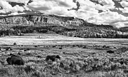 Montana Digital Art - Yellowstone Revisited by Ian McConnell
