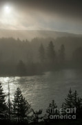 Haze Photo Posters - Yellowstone River Fog Poster by Sandra Bronstein