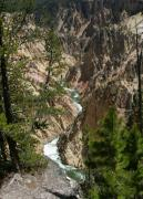 Yellowstone Digital Art Posters - Yellowstone River Poster by Linda Phelps