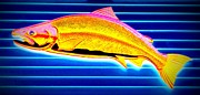 Yellowtail Framed Prints - Yellowtail Framed Print by Randall Weidner