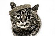 Cat Art Photos - Yes I Am Wearing A Headband by Andee Photography