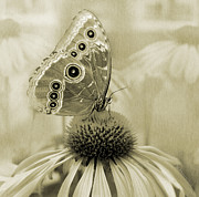 Garden Pyrography Metal Prints - Yesterdays Visitor Metal Print by Melisa Meyers