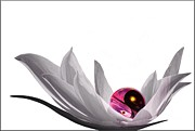 Lotus Digital Art - Yin Yang by Photodream Art