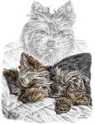Terrier Dog Drawings Framed Prints - Yorkie - Yorkshire Terrier Dog Print color tinted Framed Print by Kelli Swan