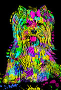 Dogs Digital Art Metal Prints - Yorkie Beauty Metal Print by Zaira Dzhaubaeva