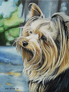 Pooch Paintings - Yorkie by Caren Bestbier