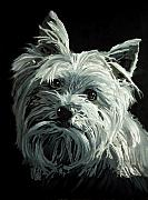 Oil Painting Acrylic Prints - Yorkie by Enzie Shahmiri