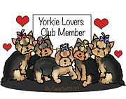 Catia Mixed Media Framed Prints - Yorkie Lovers Club Member Framed Print by Catia Cho