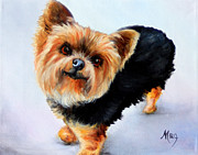 Realism Dogs Art - Yorkie by Meg Keeling