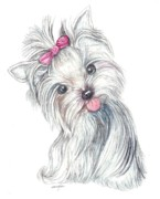 Yorkie Drawings - Yorkie Puppy by Morgan Fitzsimons