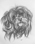 Designer Dogs - YorkiePoo by Barbara Keith