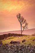 Yorkshire Photos - Yorkshire Dales by Ian Barber