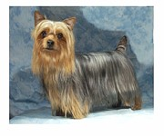 Yorkshire Terrier Digital Art - Yorkshire Terrier 36 by Larry Matthews