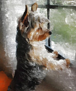 Indoor Painting Prints - Yorkshire Terrier  Its warm in here but so much more interesting out there Print by Gael Keevil