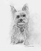 Yorkshire Drawings - Yorkshire Terrier by Jim Hubbard