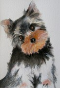Yorkshire Terrier Watercolor Posters - Yorkshire Terrier Poster by Pamela Morris