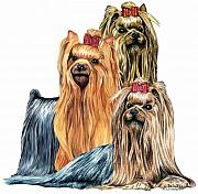 Dog Drawings Prints - Yorkshire Terriers Print by Kathleen Sepulveda