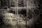 Bare Trees Art - Yosemite Valley Bridge by Bonnie Bruno