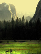 Bierstadt Photo Metal Prints - Yosemite Valley Golden . Vertical Metal Print by Wingsdomain Art and Photography